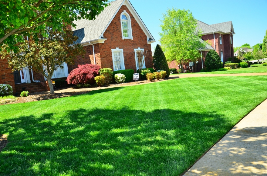 Lawn Care Services in Wesley Chapel