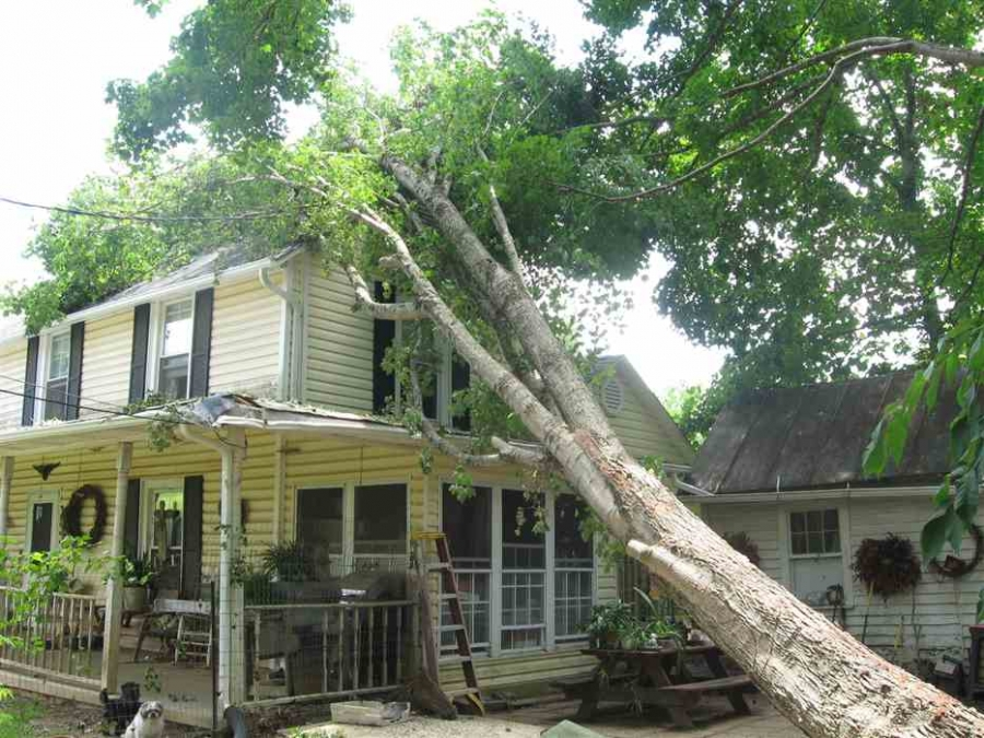 If A Tree Falls On Your House, Could It Be Inverse Condemnation?