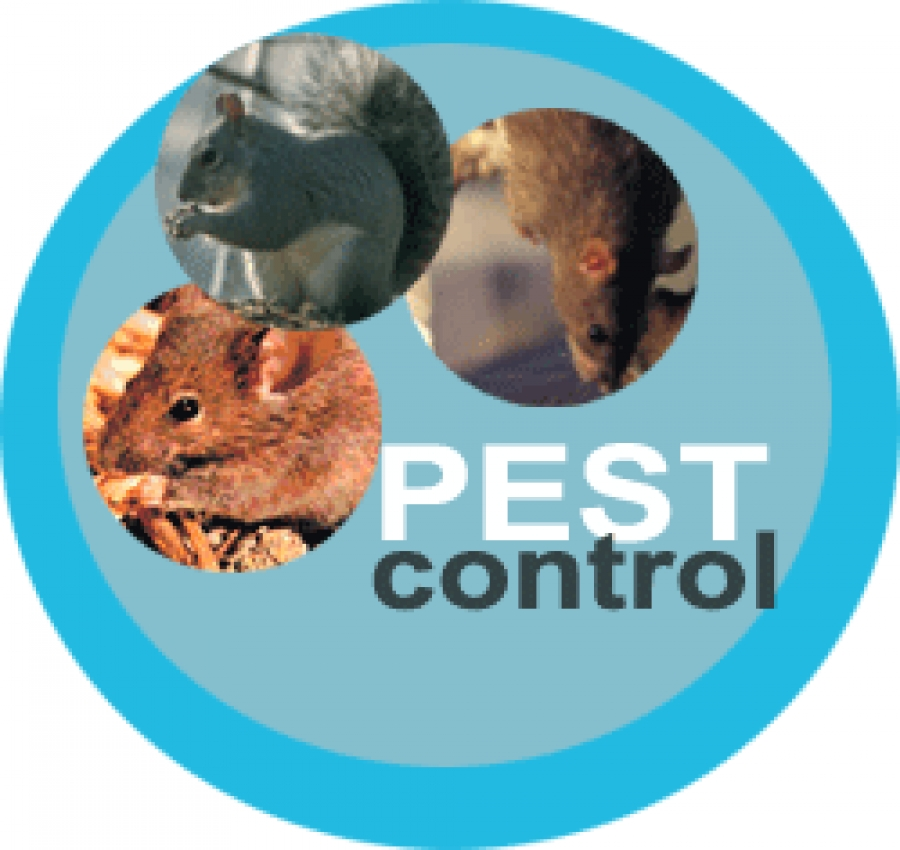 Pest Control Issues Found In Beaumont