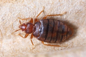 It's Time To Have That Talk - The Talk About Bedbugs