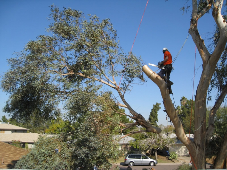 Beautify Your Yard with Great Tree Removal and Tree Care Services in Sydney