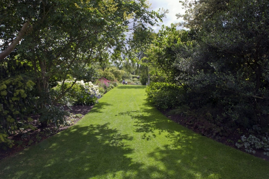 How to Cultivate a Lawn in the Shade
