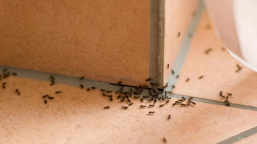 How To Get Rid Of Ants?