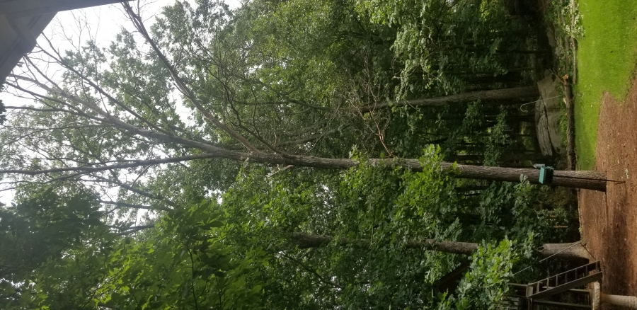 Why People Need Professional Tree Services In Huntsville, AL