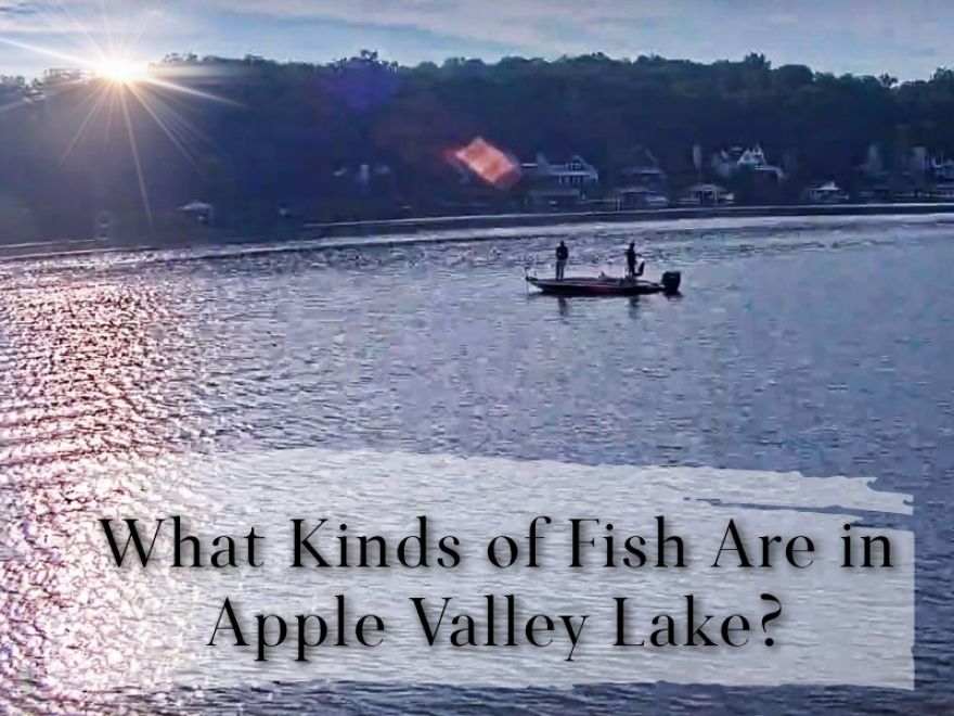 Apple Valley Lake is home to a variety of fish species.