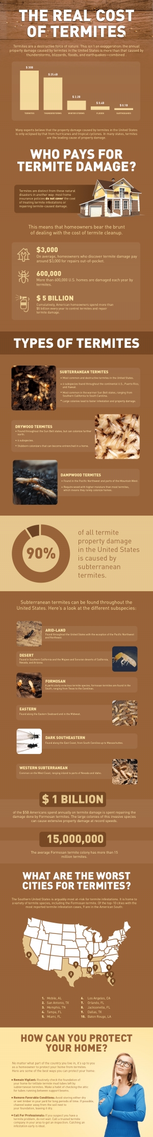 What You Need to Know About Termites and Selling Your Home - Realty Times