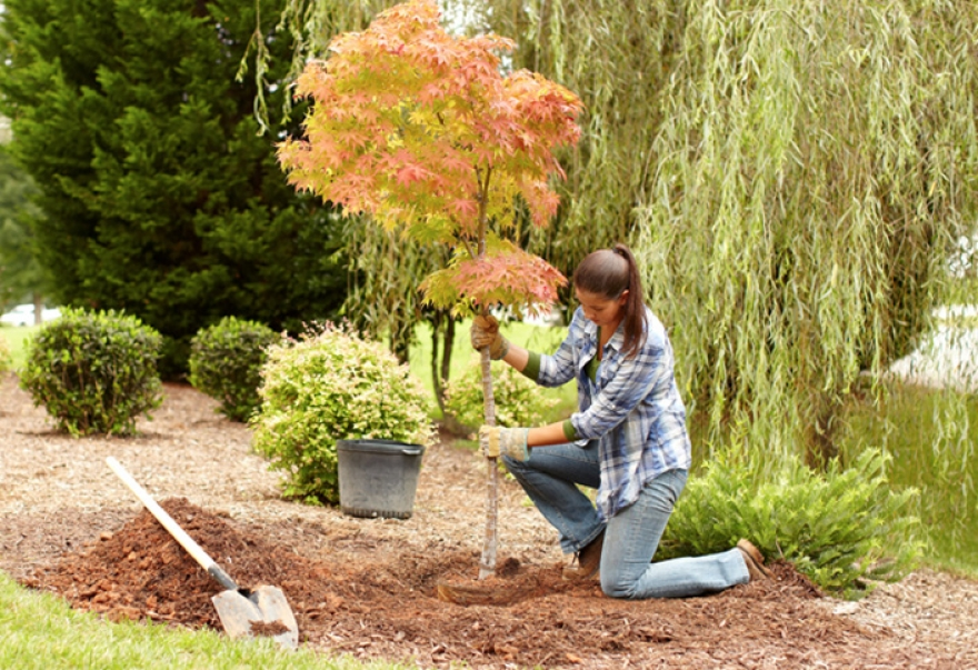 Planting Trees Around Your Home