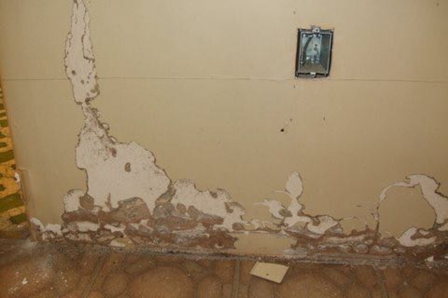 Do Termites Infest Drywall?