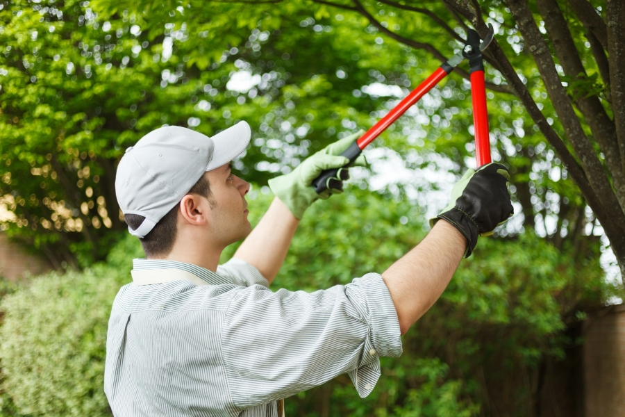 3 Major Reasons Why Trees Maintenance is Important for Our Life