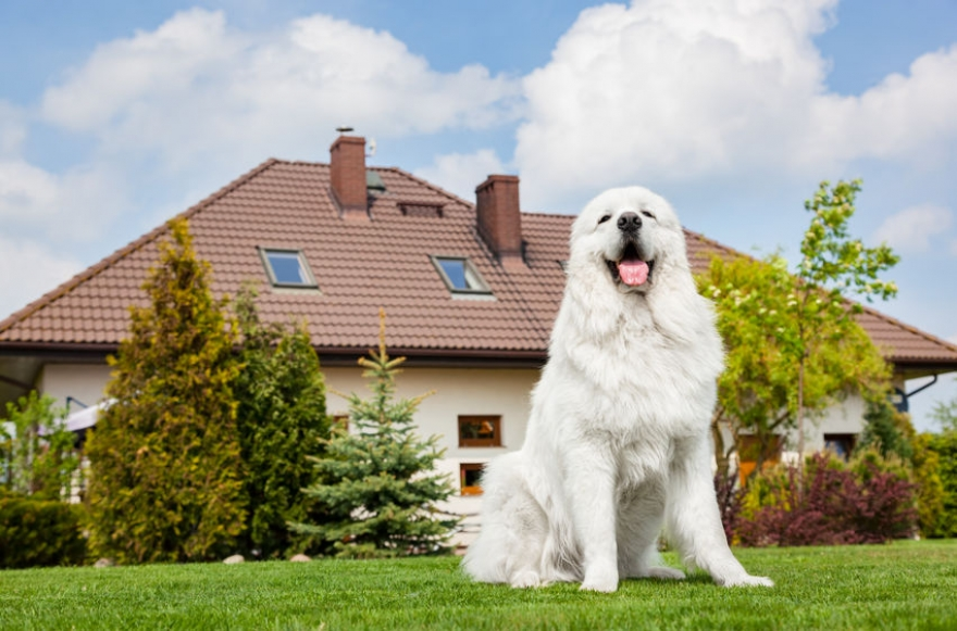 HOW TO EFFECTIVELY KEEP YOUR DOG WITHIN YOUR HOME'S BOUNDARIES