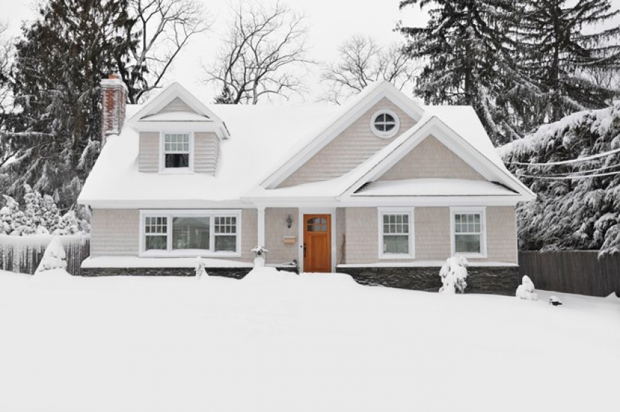 The top Common Pests That Invade Your Home in the Winter