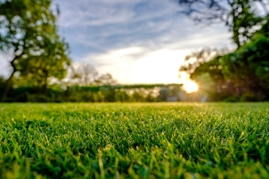 6 Reasons to Buy a Property With a Well-Maintained Lawn