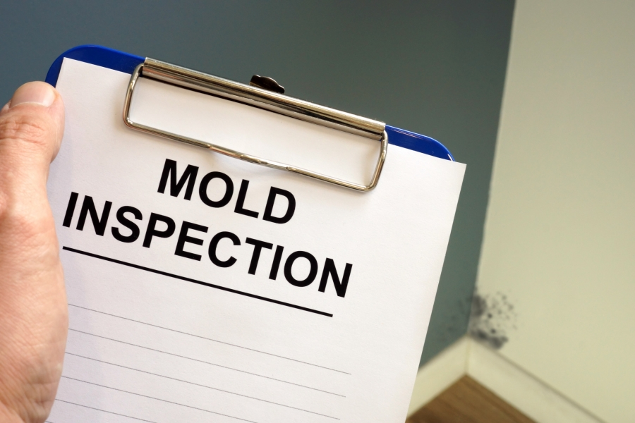 Hiring a Qualified Mold Inspector for Your Home: Questions to Ask and What to Consider
