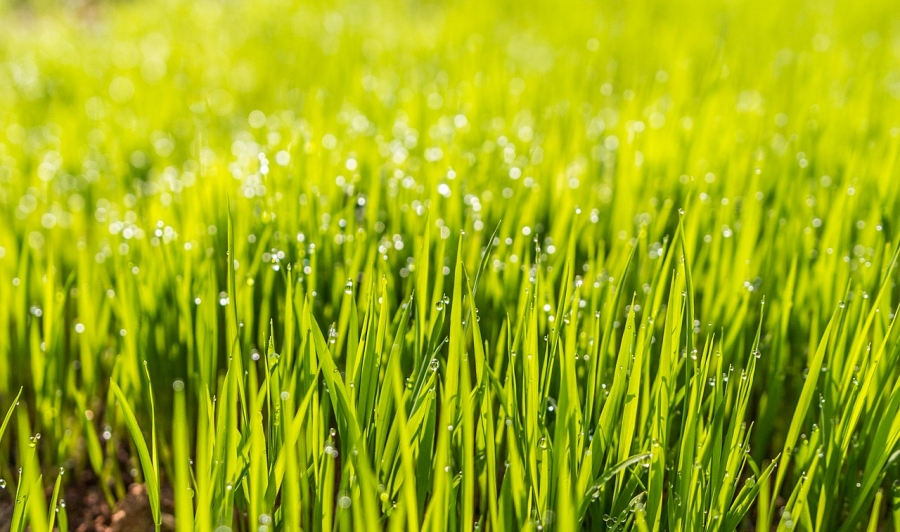 Lawn Care For The Fall: Essential Tips to Follow