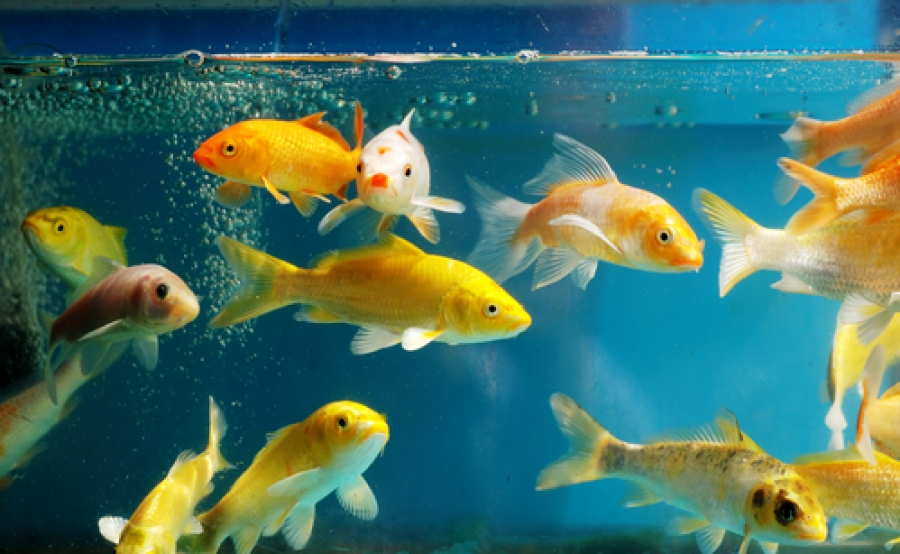 How a Fish Tank Can Make Your House Feel More Homey