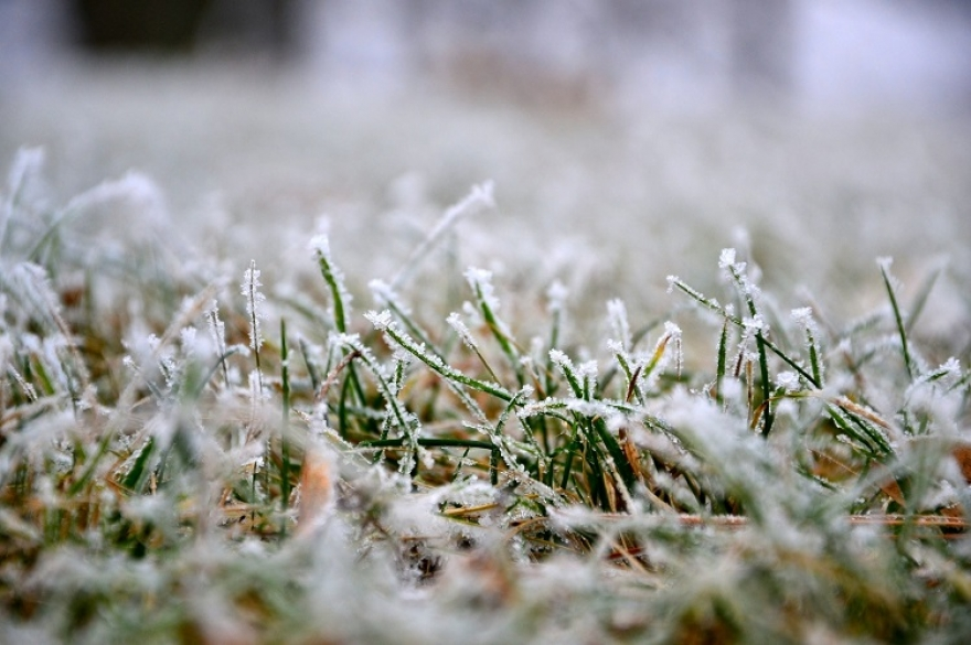 Green Thumb, Winter Blues: Essential Winter Lawn Care Tips for Every Homeowner