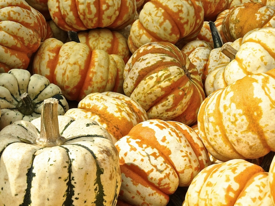 6 Creative Things to do With Your Pumpkins This Year (That Don't Involve Pie)
