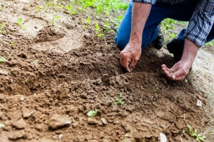 The Ultimate Seniors' Guide to Homesteading In Retirement