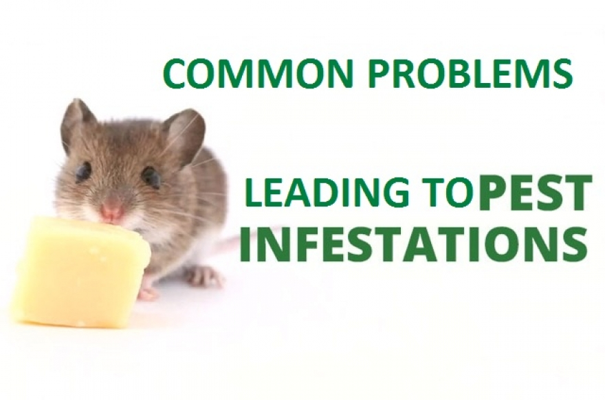 Common Problems leading to Pest Infestations