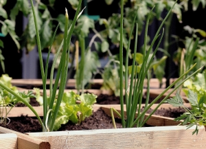 Tips For Growing An Urban Garden