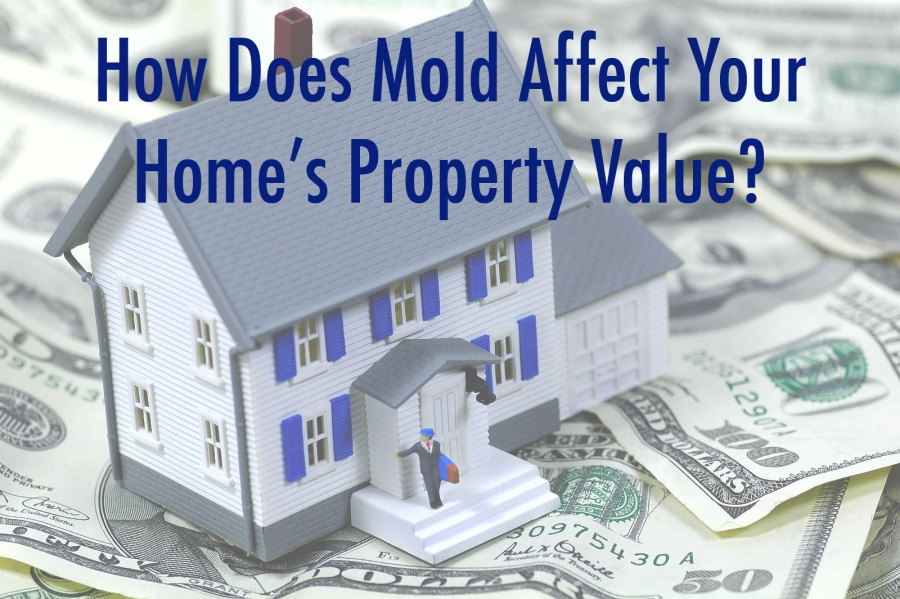 How Mold Infestation Can Affect Property Value