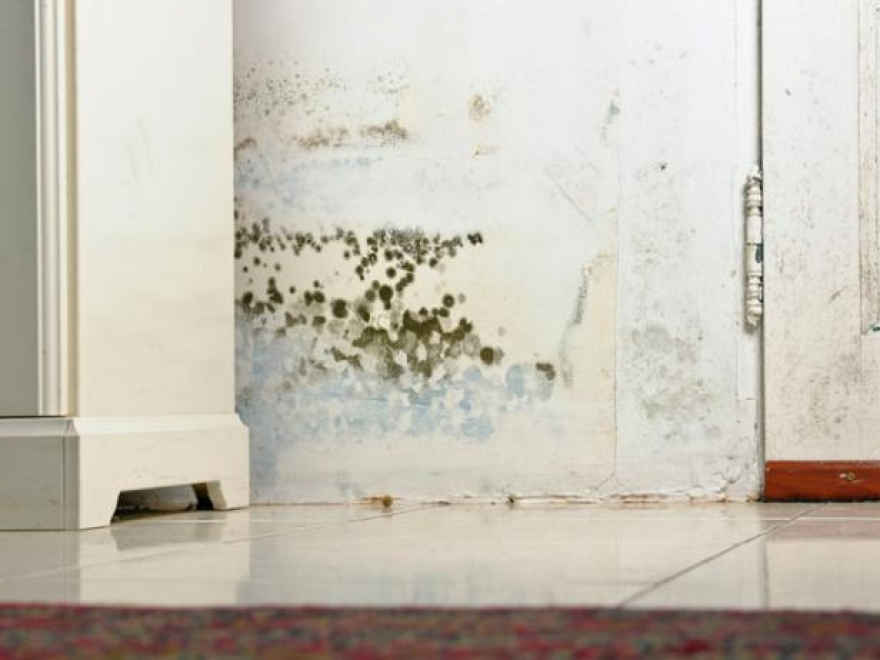 Signs to look out for that indicate the need for mold remediation