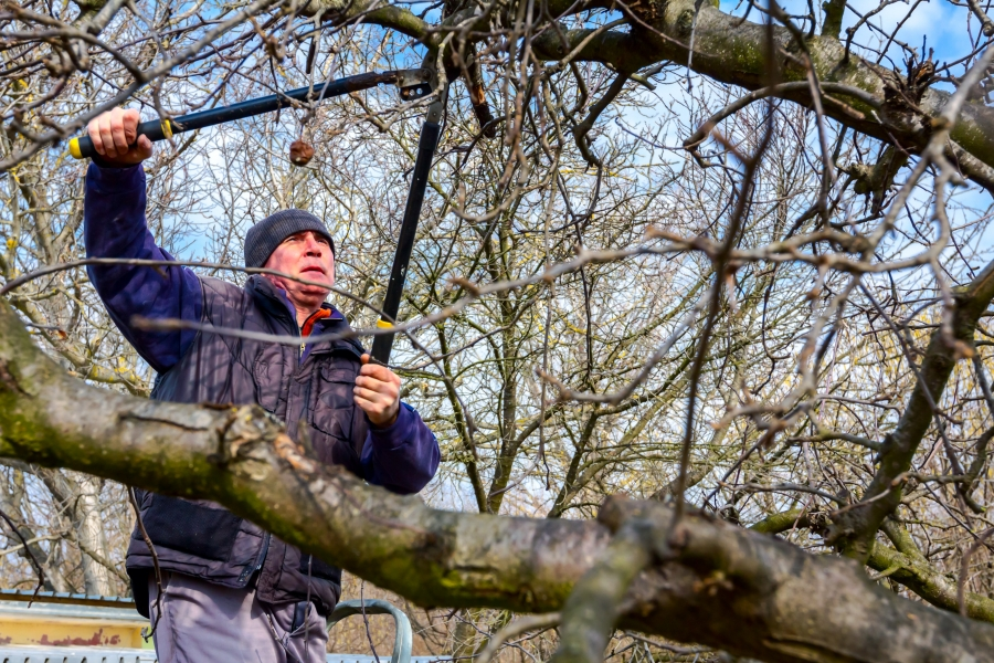 Benefits Of Pruning Trees Around Your Home Before Selling