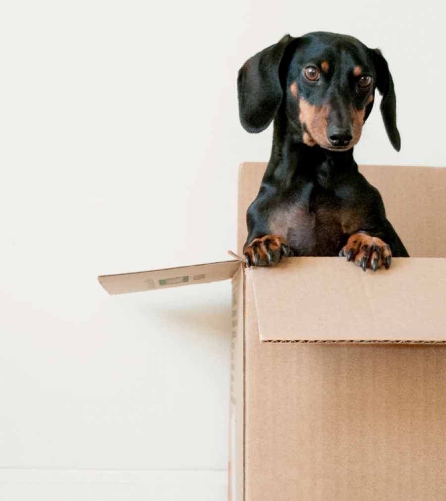 Tips For Moving In to Your New Home