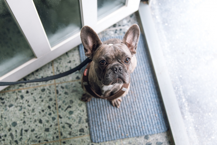 Different Types of Pet Doors and What Is Right for Your Home