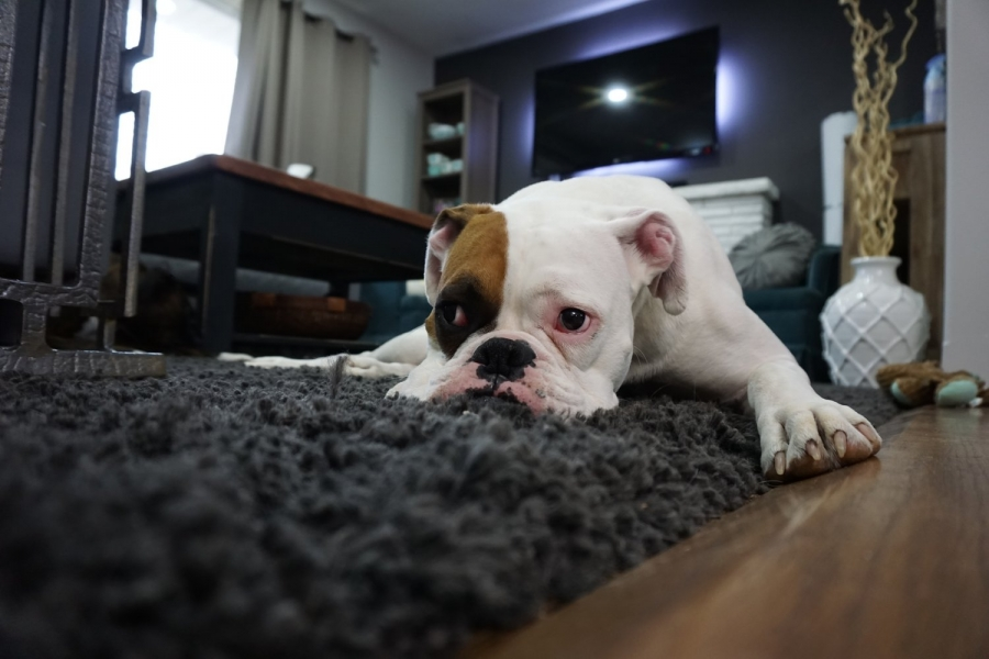 8 Tips to Make Your Home a Pet Haven