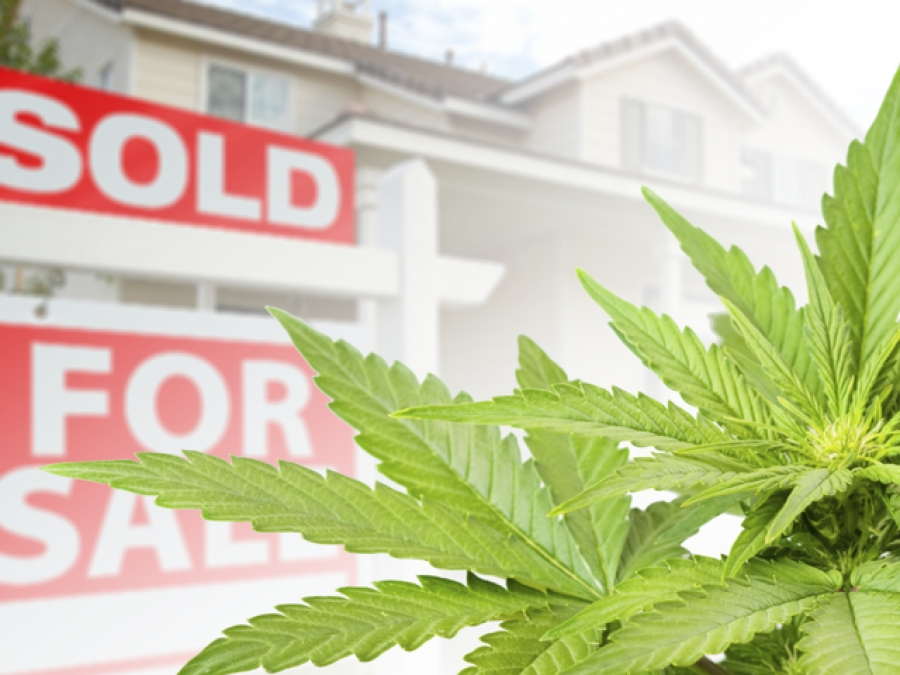 "Legalizing Marijuana Will Make Your Home Value...Let's Just Say...""Higher""."